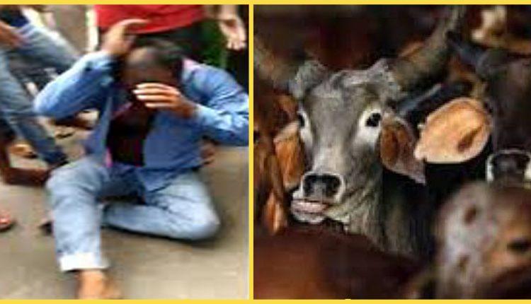 जिस गौ हिंसा से लहूलुहान हैं पसमांदा-बहुजन, उसी गौ आतंक का लाभार्थी है सय्यैद ब्राह्मण